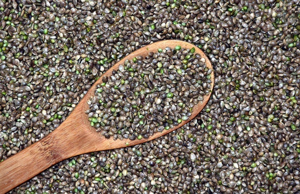 Bancos de semillas