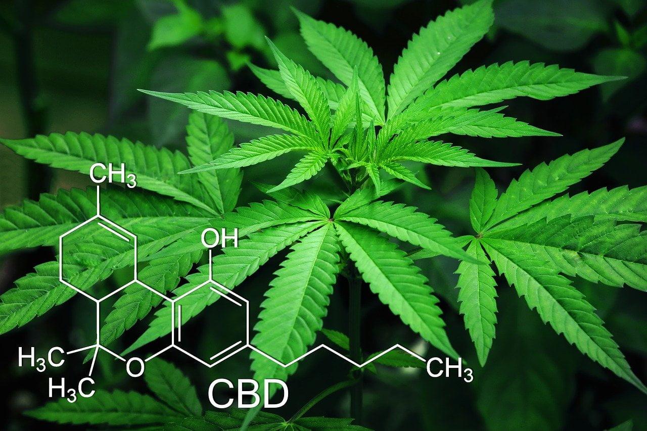 CBD, componente del cannabis